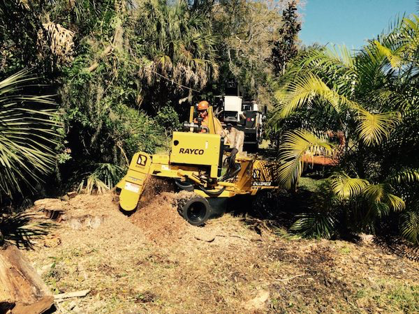 Tree Stump Grinding in Bakersfield CA