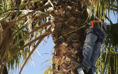 Tree Services in Bakersfield CA