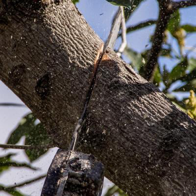 Tree Removal - Bakersfield Tree Service